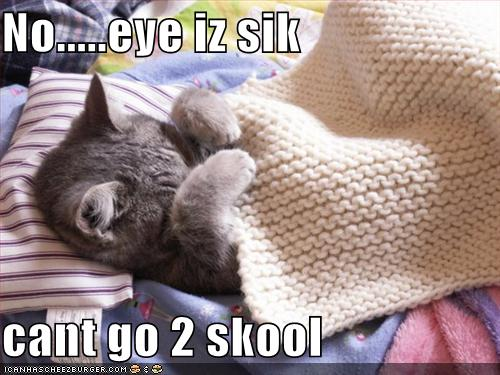Funny Pictures Cat Sick And Cannot School