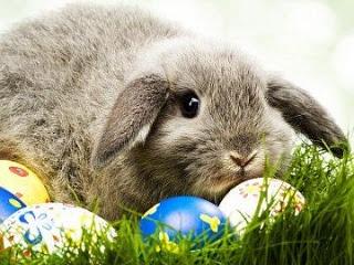 Zeko i jaja, Uskrs download besplatne pozadine slike za mobitele