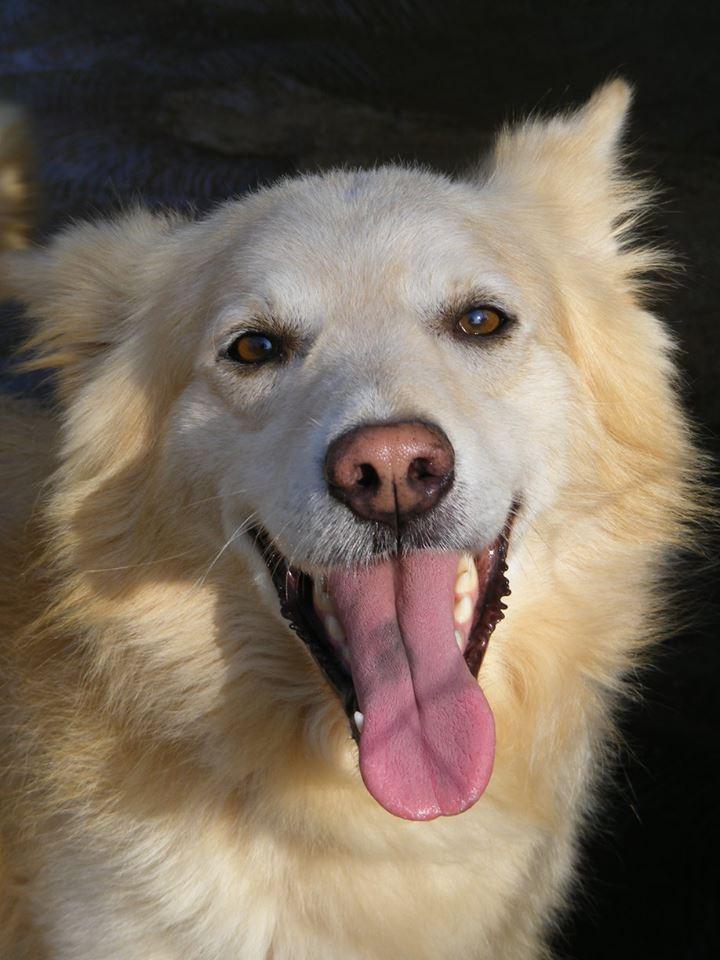 Adozione Cani Adulti E Cuccioli In Regalo In Pugliaanche Di Razza