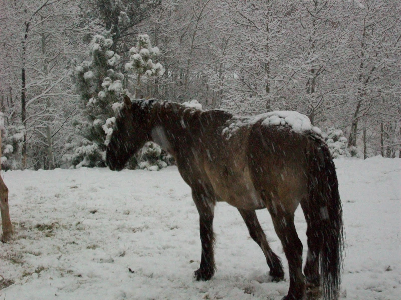 Popular   Wallpaper Horse Winter - April+download+131  Pic_964926.jpg
