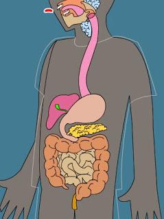 http://www.edu365.cat/primaria/muds/natural/digestiu1/index.htm#