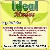 Ideal Mudas