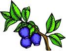 Berry's Wild Travels