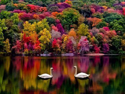 Felicitari natura