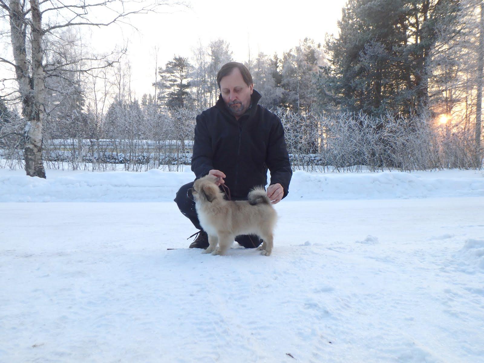 Har kjøpt ei ny Importtispe fra Finland fra oppdretter Jouko L. Toyway kennel.
