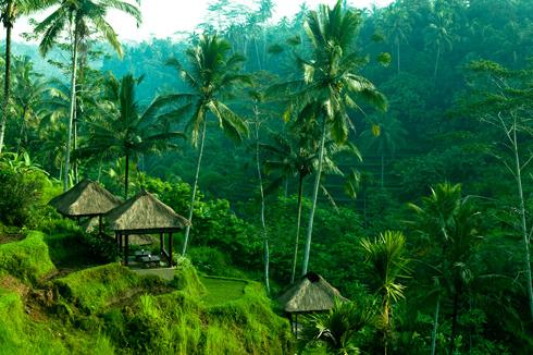 Tegalalang Bali Panorama