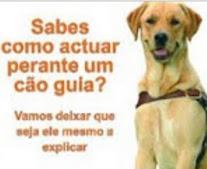 Como actuar perante um cão guia