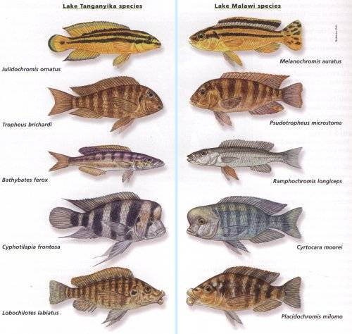 Freshwater Aquarium Fish Keeper