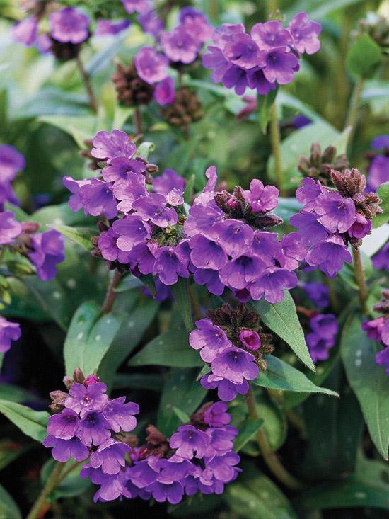 mayo 2013 - Guia de jardin. Blog de jardinería y plantas