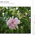 Flickr Interdit Le Partage Des Images Protégées Sur Pinterest