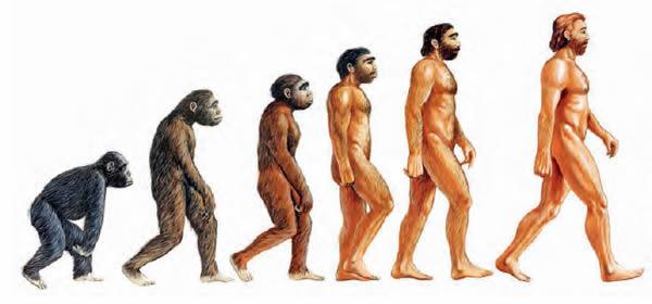 Teoria de Darwin Evolucion Del Hombre Teoria de la Evolucion Del