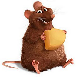 Long term highly saturated fat diet does not induce NASH in Wistar rats