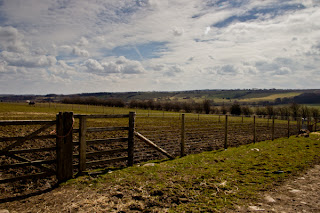 Countryside near Harewood House