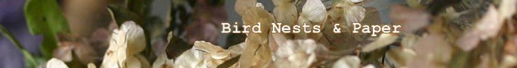 Bird Nests & Paper