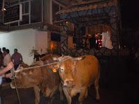 Vacas tirando de los carros