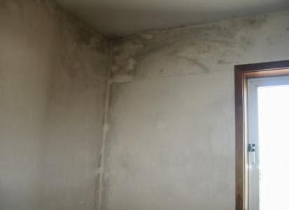 Contaminação-por-fungos-com-incidência-nas-zonas-de-pontes-térmicas-pintar-a-casa
