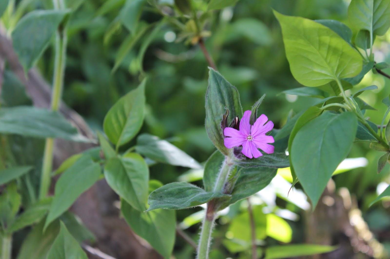 Anettesflora: forhaven, nu også med diy låge af kæppe