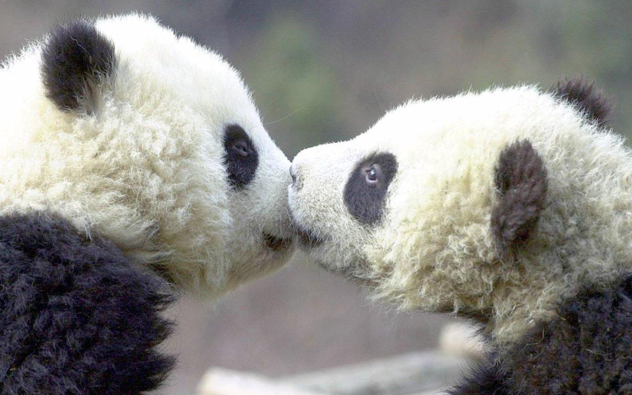 cute animals kissing