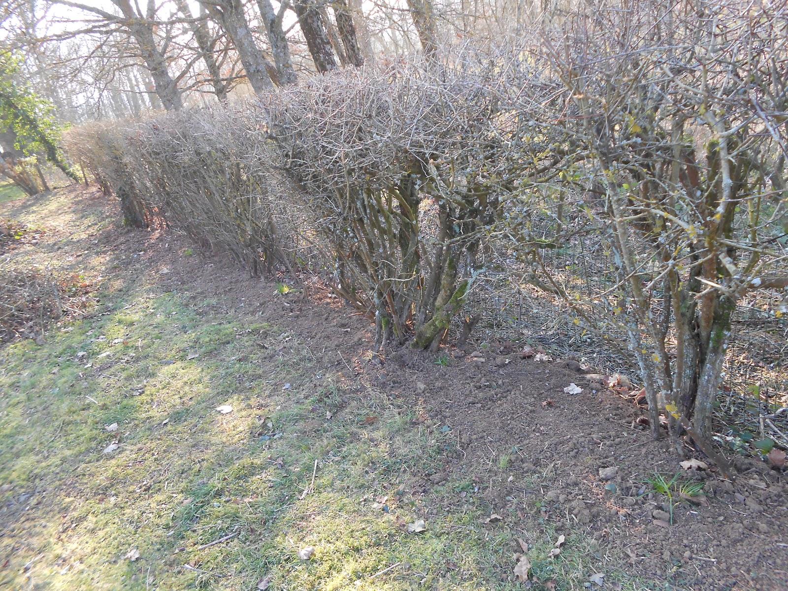 Le jardin d 39 alecs nettoyage des haies for Nettoyage jardin printemps