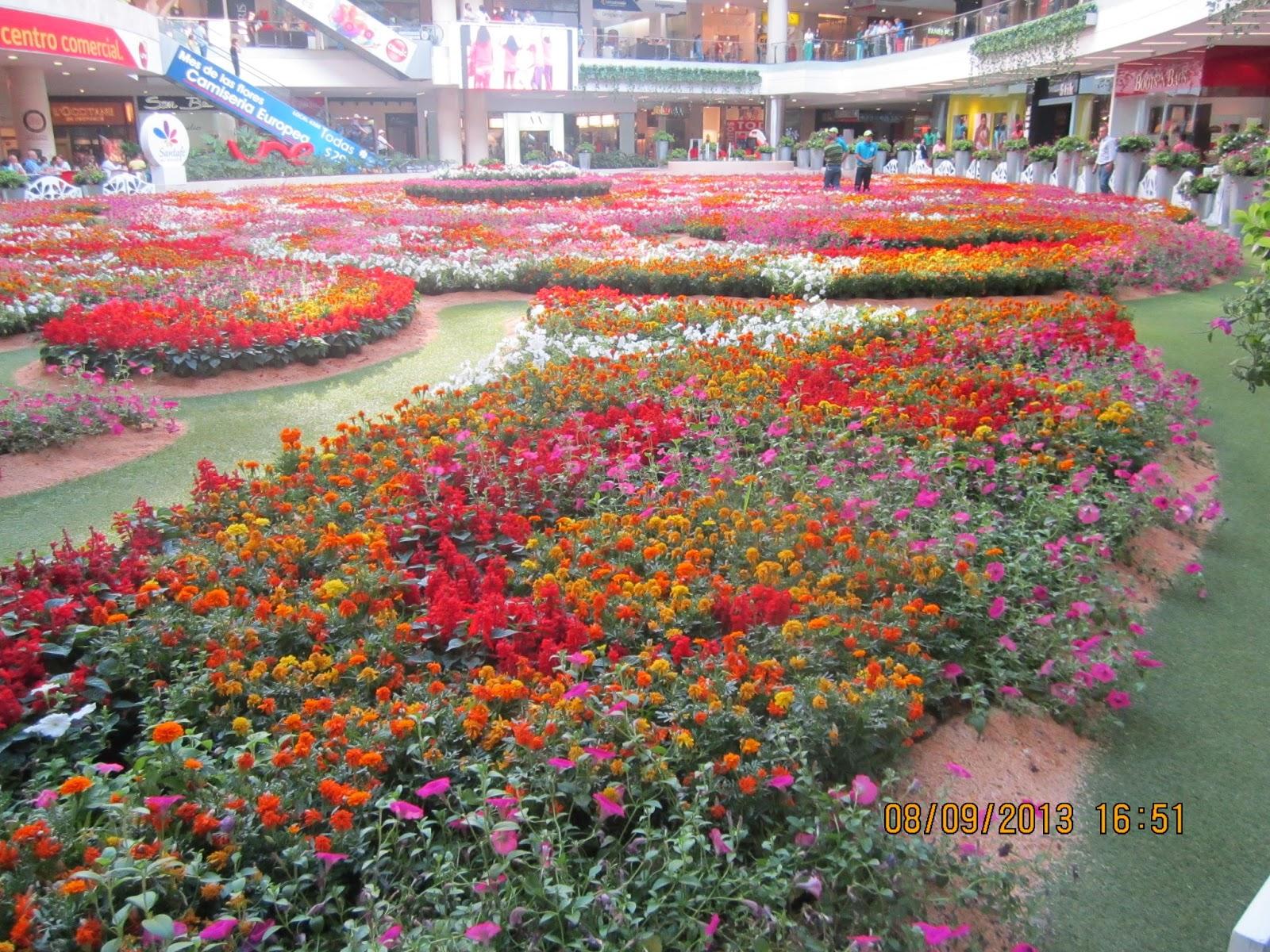 Noticias de Flores Colombianas:Información, fotos y notas