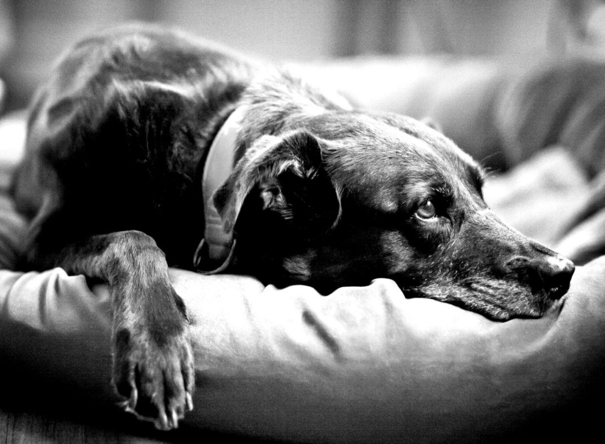 Pet Dog Photography  Denver Colorado Pet Photographer  Colorado