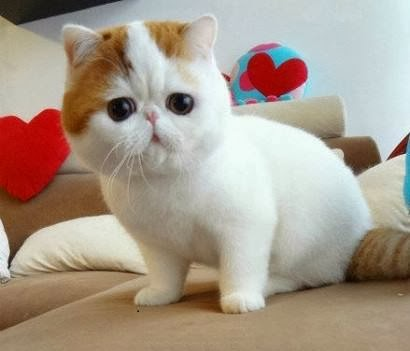 Cute Cats World The Cutest Cat Ever Real Or Fake
