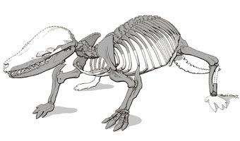 esqueleto de Fruitafossor