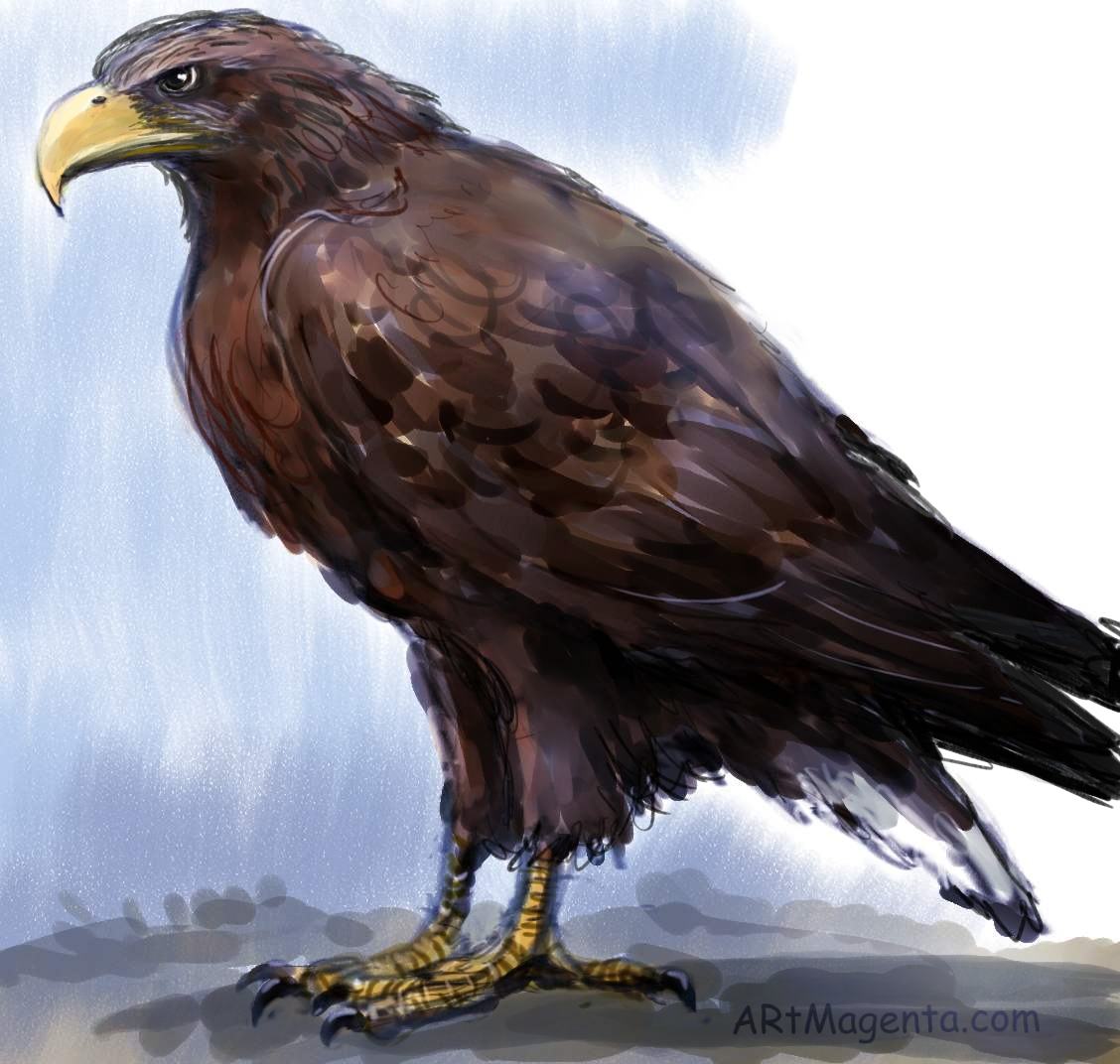 White-tailed Eagle  sketch painting. Bird art drawing by illustrator Artmagenta