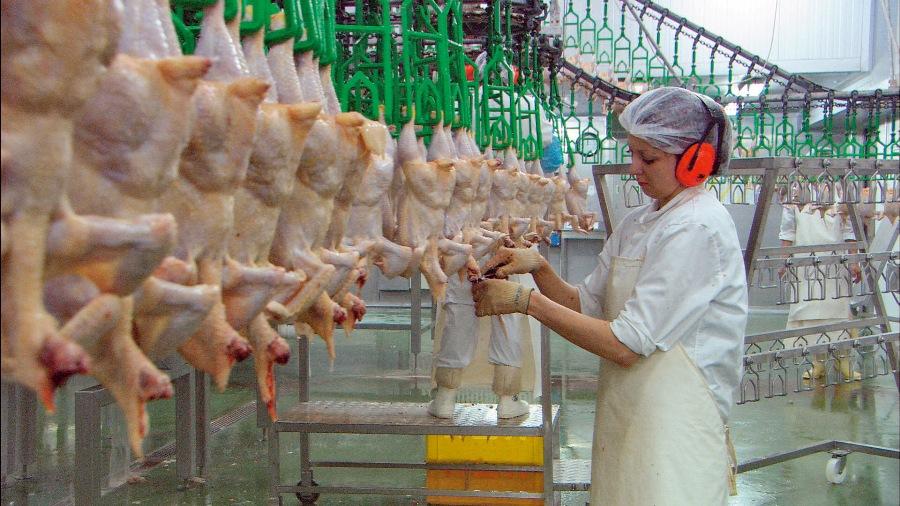 """Los seres """"humanos"""" matan y tragan a 128 millones de pollos y gallinas (128.000.000) cada... día."""