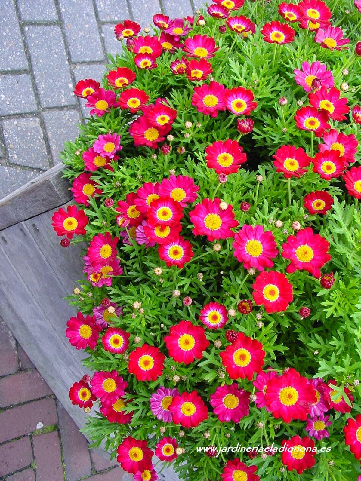 Jardineria eladio nonay plantas de invierno para nuestras Plantas jardineras exterior