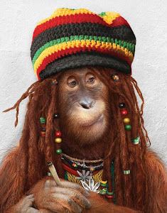 Macaco Rastafari.