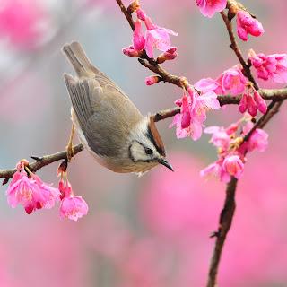 Bahar yorgunluğu nasıl geçer-Bahar yorgunluğunun belirtileri tedavisi