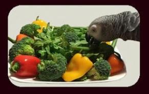 Healthy Foods for Birds