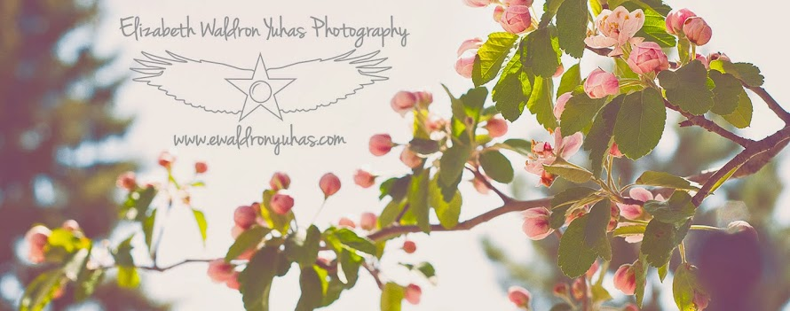 Albuquerque - Portraits, weddings, and fine art photography and painting - Beth Waldron-Yuhas