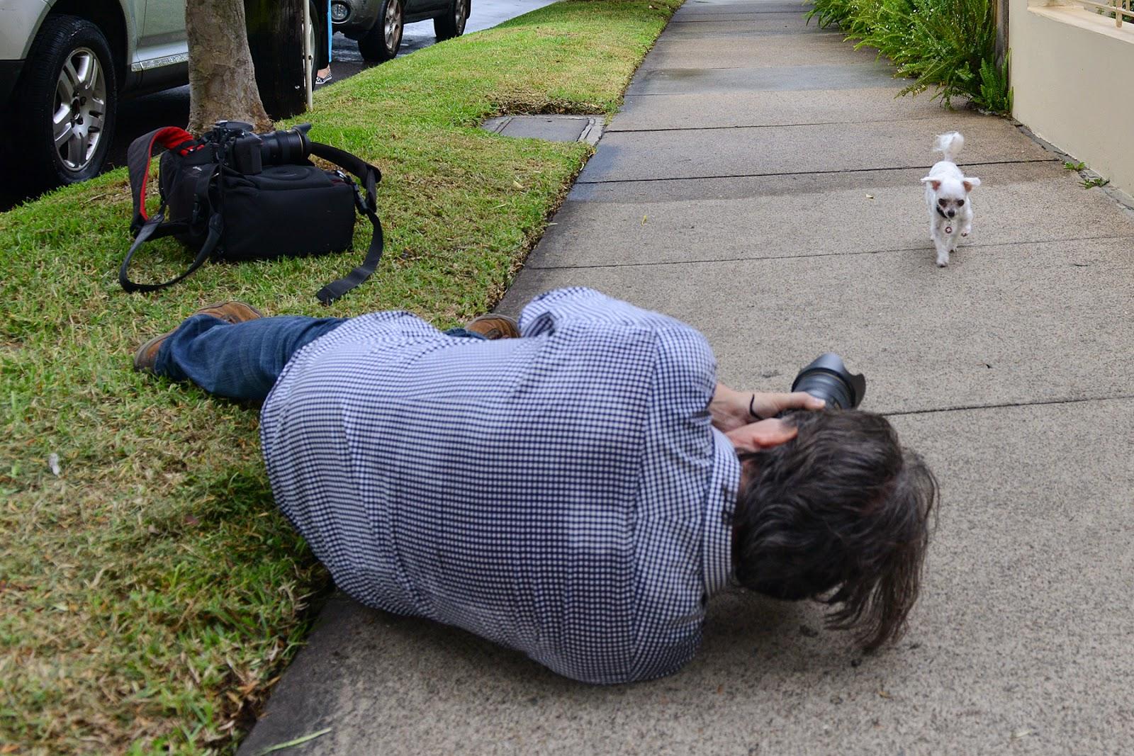 pet photography, dog photography, Pierre Mardaga