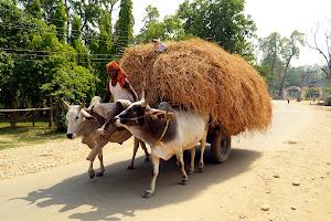 Непал. Жизнь на равнине.