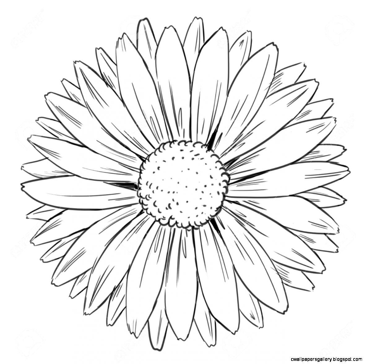Illustration Of Petal Arrangement Of A Flower Royalty Free
