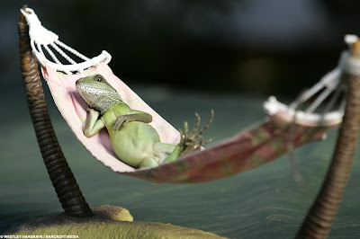 Simplic☺ The Life Of A Lizard