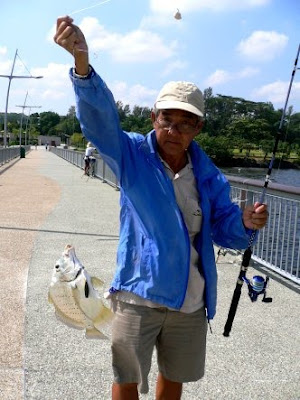 Spotted Sicklefishes also know as Cao Xi 曹喜[Chinese] or Ikan Daun Baharu weighing 1kg plus Caught by Mr Quek at Woodland Jetty Fishing Hotspots was created to share with those who are interested in fishing on tips and type of fishes caught around Woodland Jetty Fishing Hotspots.