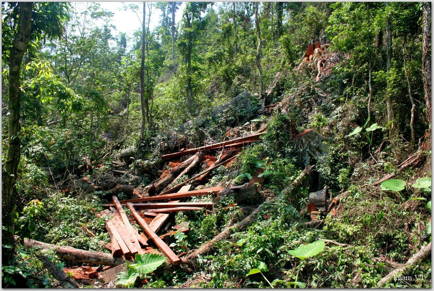 pha-rung-loss-habitat