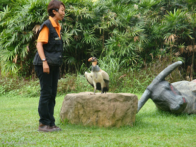 Jurong Bird Park - Kings of the Skies Show Photo 11