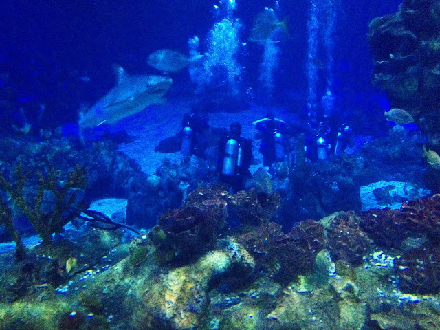 Divers at Epcot's DiveQuest, along with our new friends the sharks