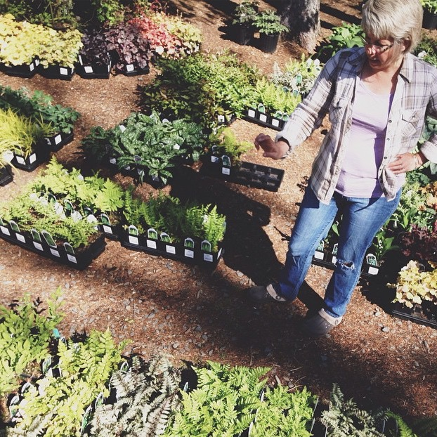 Elaine From Stonewall Garden, Helped To Source 100+ Ferns For Promise Ridge.