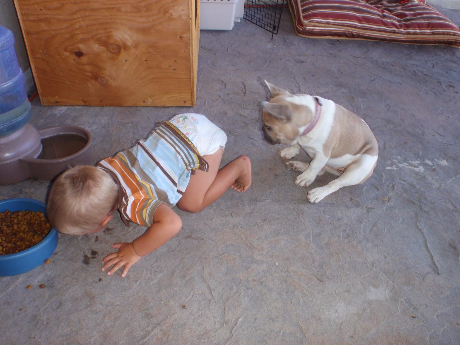 Дети с животными смешное фото