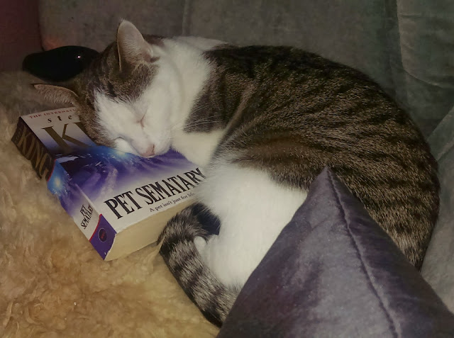 My kitty Sofie and Stephen King's Pet Sematary