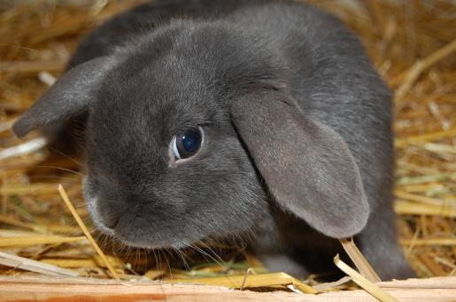 Prawidłowe żywienie królików
