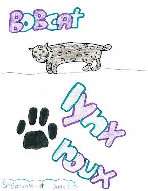 Lynx roux- Bobcat