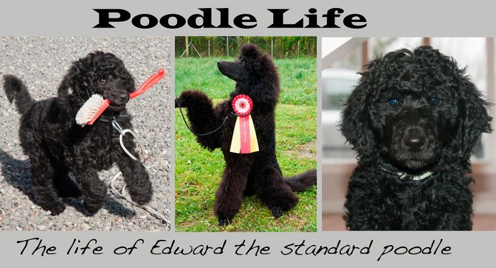 Poodle Life
