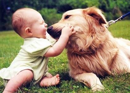 cum isi arata cainii dragoste