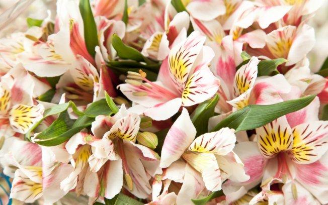 decoracao casamento gypsophila:CRBC Video Produções: Decoração: quais flores escolher em cada